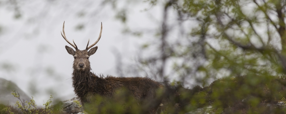 Image of: Arms Wildlife Estates Scotland Quora Helping Rural Scotland Thrive Scottish Land Estates