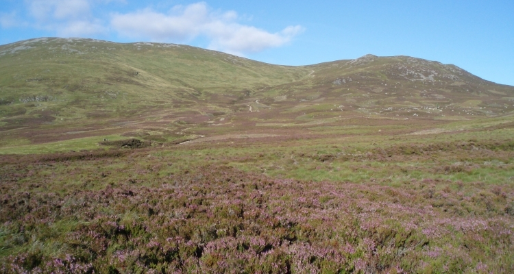 Heather Moorland Picture